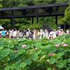 菊正宗が万博記念公園「象鼻杯」に清酒を提供